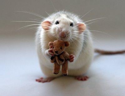 Mouse_teddybear