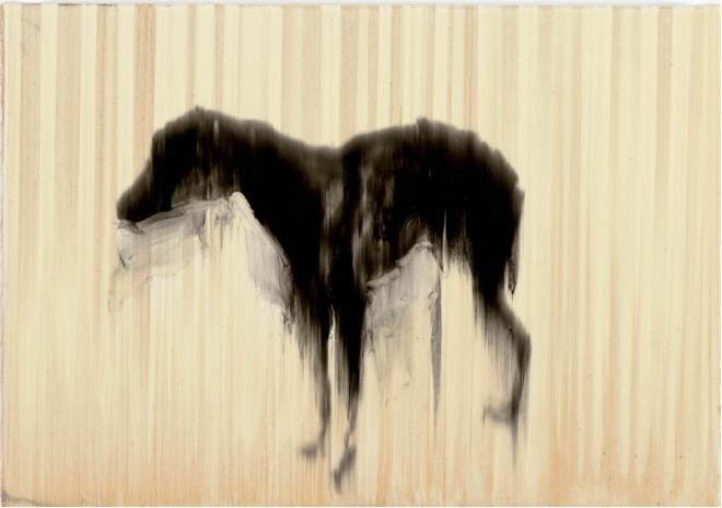 RHdog